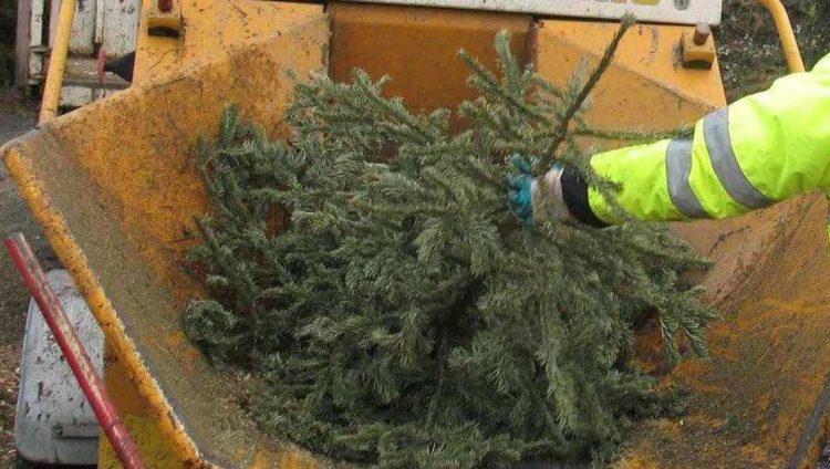 Opération broyage sapins de Noël