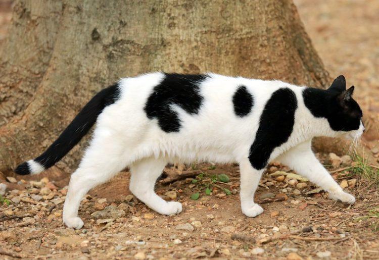 Capture de chats errants